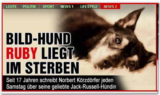 Bild-Hund Ruby liegt im Sterben