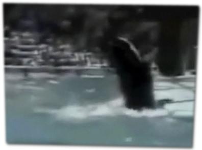 Wal im Wasser