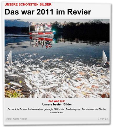 Schock in Essen: Im November gelangte Gift in den Baldeneysee. Zehntausende Fische verendeten.