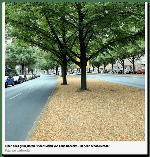 Ein Bild, auf dem man grüne Bäume sieht, unter denen bräunliche Blätter liegen. Die Bildunterschrift lautet:  Oben alles grün, unten ist der Boden von Laub bedeckt – ist denn schon Herbst?