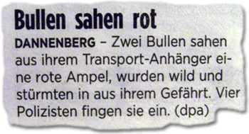 Bullen sahen rot DANNENBERG - Zwei Bullen sahen aus ihrem Transport-Anhänger eine rote Ampel, wurden wild und stürmten aus ihrem Gefährt. Vier Polizisten fingen sie ein. (dpa)