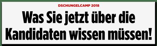Schlagzeile BILD.de: Dschungelcamp 2018 - Was Sie jetzt über die Kandidaten wissen müssen!
