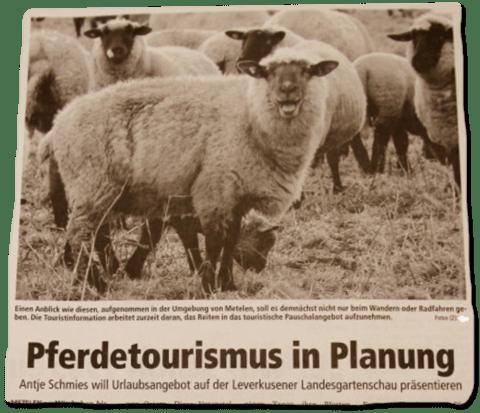 Ausriss eines Zeitungsartikels - Pferdetourismus in Planung - dazu ein Foto einer Schafsherde
