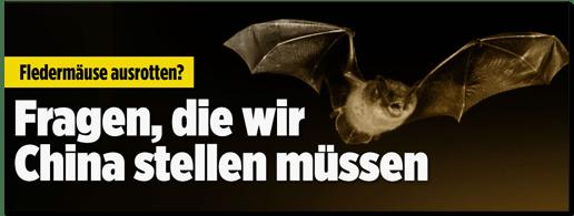 Screenshot Bild.de - Fledermäuse ausrotten? Fragen, die wir China stellen müssen