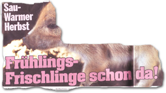 """Sau-Warmer Herbst: Frühlings-Frischlinge schon da!"""