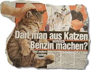 Darf man aus Katzen wirklich Benzin machen?