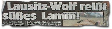 Lausitz-Wolf reißt süßes Lamm!