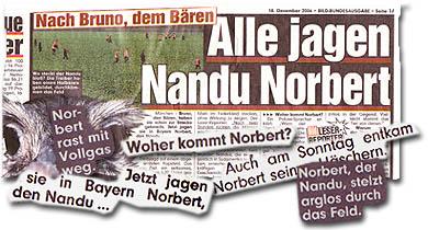 """""""Nach Bruno, dem Bären - Alle jagen nandu Norbert"""""""