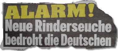 Alarm! Neue Rinderseuche bedroht die Deutschen