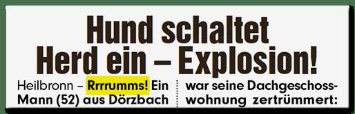 Schlagzeile: Hund schaltet Herd ein - Explosion! - Rrrrumms!