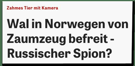 Screenshot Zeit Online mit der dpa-Überschrift - Zahmes Tier mit Kamera - Wal in Norwegen von Zaumzeug befreit - Russischer Spion?
