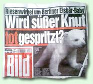 """""""Wird süßer Knut totgespritzt?"""""""