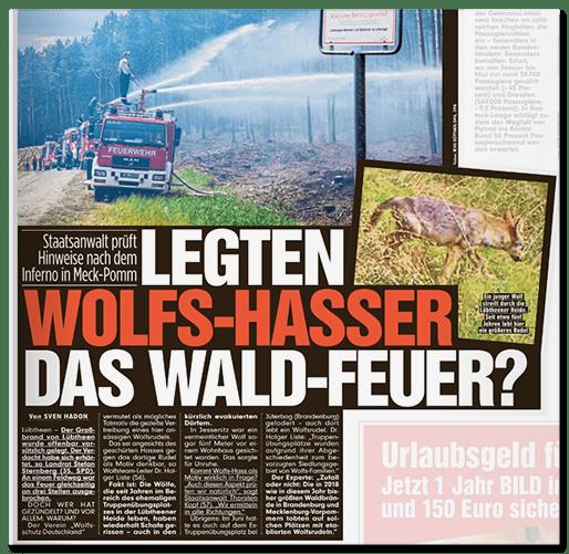 Ausriss Bild: Legten Wolfs-Hasser das Wald-Feuer?