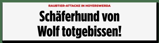 Screenshot Bild.de: Schäferhund von Wolf totgebissen!