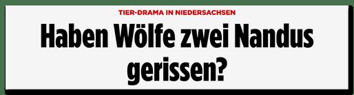 Screenshot Bild.de: Haben Wölfe zwei Nandus gerissen?