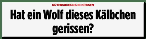 Screenshot Bild.de: Hat ein Wolf dieses Kälbchen gerissen?
