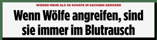 Screenshot Bild.de: Wenn Wölfe angreifen, sind sie immer im Blutrausch