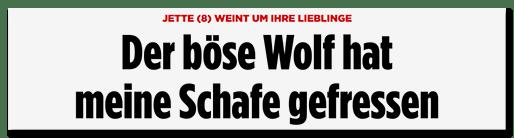 Screenshot Bild.de: Der böse Wolf hat meine Schafe gefressen