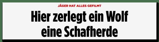 Screenshot Bild.de: Hier zerlegt ein Wolf eine Schafherde