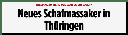Screenshot Bild.de: Neues Schafmassaker in Thüringen