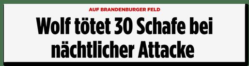 Screenshot Bild.de: Wolf tötet 30 Schafe bei nächtlicher Attacke