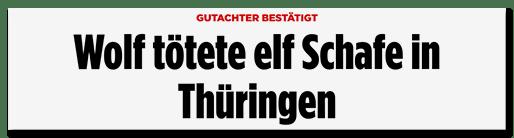 Screenshot Bild.de: Wolf tötete elf Schafe in Thüringen