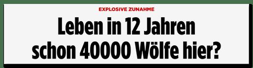 Screenshot Bild.de: Leben in 12 Jahren schon 40000 Wölfe hier?