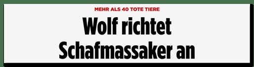 Screenshot Bild.de: Wolf richtet Schafmassaker an