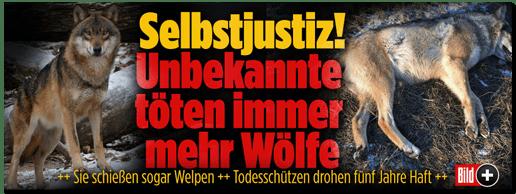 Screenshot Bild.de - Selbstjustiz! Unbekannte töten immer mehr Wölfe - Sie schießen sogar Welpen - Todesschützen drohen fünf Jahre Haft