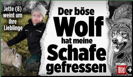 Screenshot Bild.de - Jette (8) weint um ihre Lieblinge - Der böse Wolf hat meine Schafe gefressen